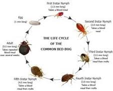 Bed Bugs In Ohio Kill Bed Bugs In Clark County 45501 937 322 2245 Kill Bed