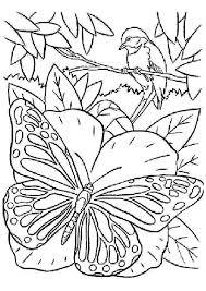 coloriage ã dessiner simã on le papillon