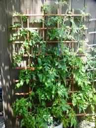 ez trellis blog gardening made easy