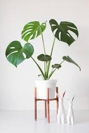 best 25 house plants ideas on pinterest plants indoor plant
