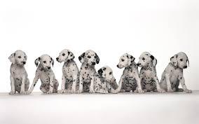 Dog Wallpapers Dog Wallpapershd Wallpapers