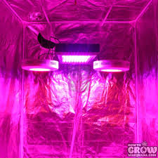 led lights for dorm growing with led lights and led grow organica garden supply