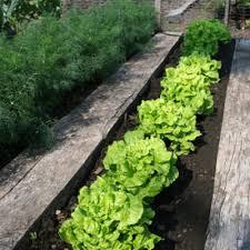 organic garden soil use organic compost more gardeners com