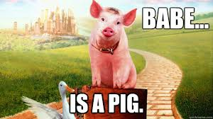 Babe Memes - babe is a pig funny meme picture