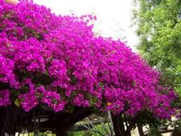 10 best landscaping plants for san diego climate
