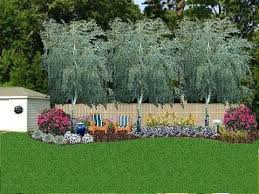 Privacy Backyard Ideas Small Backyard Trees For Privacy Designandcode Club