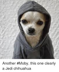 Meme Chihuahua - another moby this one clearly a jedi chihuahua chihuahua meme