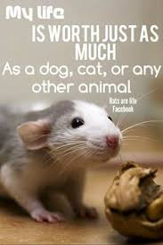Are Mice Blind Helpful Tips On Caring For Pet Mice Pet Mice Mice And Rats