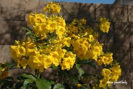native arizona plants what plant where beautiful plant combinations ramblings from a