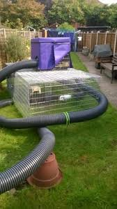 awesome ideas for guinea pig hutch and cages amusement parks