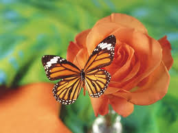 butterfly and flower pictures wallpapers butterfly and flower free