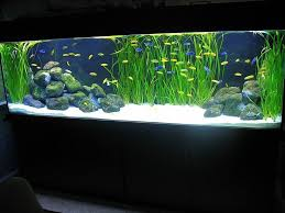 Aquascape Chicago 87 Best Aquascape No Plant Images On Pinterest Aquarium Ideas