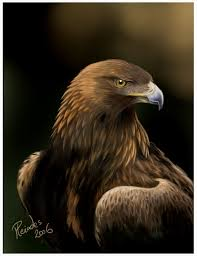 stellers sea eagle wallpapers drawn steller u0027s sea eagle charcoal drawing pencil and in color