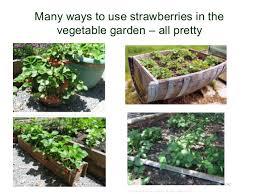 native plants u0026 the vegetable garden 2012