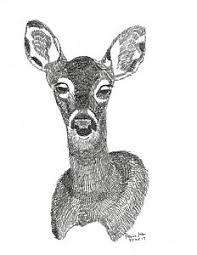 white tailed deer drawings fine art america