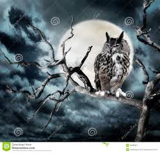 owl on a tree at stock photo image of bird 35286312