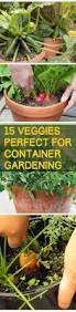 25 unique container vegetable gardening ideas on pinterest