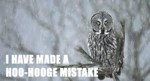 Owl Memes - owl memes album on imgur