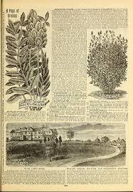 Garden Express Summer Catalogue - file 1893 maule u0027s seed catalogue page 127 bhl42541357 jpg