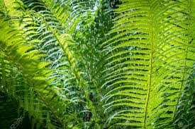 5 Dominant Plants In The Tropical Rainforest Taiga On Emaze