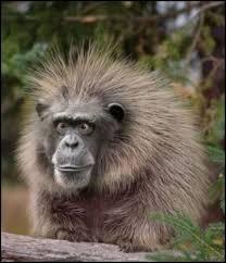 Monkey Meme Generator - holy sh t monkey meme generator imgflip