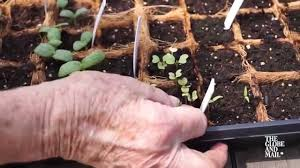 gardening basics tricks and tips for growing plants from seed