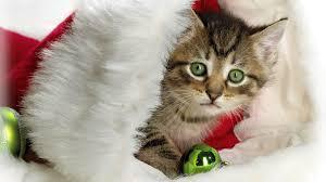 i love cats cute cat u0026 kitten pictures cute cat u0026 kitten pictures