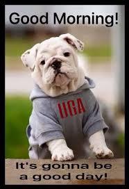 Georgia Bulldog Memes - 343 best ga bulldogs football images on pinterest collage