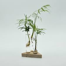 Indoor Plant Vases High Quality Indoor Plant Vases Buy Cheap Indoor Plant Vases Lots