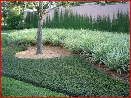 Backyard Ground Cover Ideas 12 Best Ground Cover Ideas Images On Pinterest Ground Covering