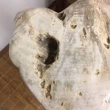 ipw1 petrified wood table or pedestal or stool 22 75 u2033h x 9 u2033l x 7 u2033w