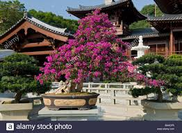 Lin Family Mansion And Garden Tree Lin Stock Photos U0026 Tree Lin Stock Images Alamy