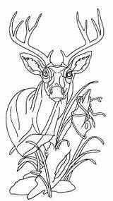 Wood Burning Patterns For Free by Free Wood Burning Patterns For Beginners Yahoo Image Search