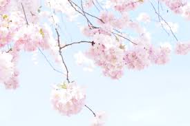 free images branch plant sky sweet petal bloom food