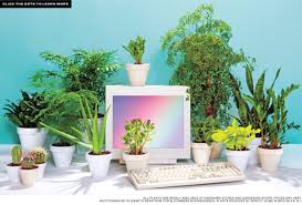 Best Plants For Desk by Best Desk Plants 12 For The Office Bloomberg