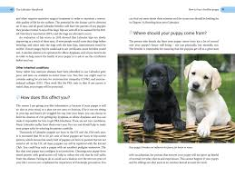 the labrador handbook the definitive guide to training and caring