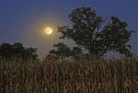 it u0027s harvest moon time at deco c rate u2013 madpea productions