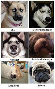 Funny Dog Face Meme - funny dog faces dump a day