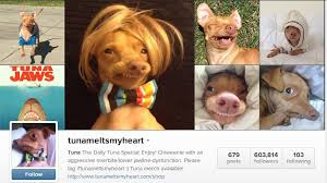 Tuna Sub Meme - yup phteven tuna the dog know your meme