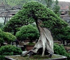 Define Tree Wonderful Trees