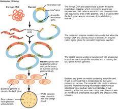 tools of genetic engineering boundless microbiology