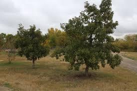 adopt a tree wascana centre
