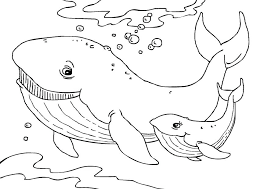 Fancy Whale Coloring Pages For Your Kids With W Vonsurroquen Me Whale Color Page