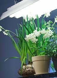 download best lights for growing plants solidaria garden