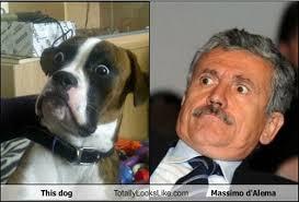boxer dog meme meme watch baffled boxer dog is mesmerized by everything