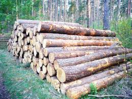 beech wood logs beech wood logs suppliers and manufacturers at