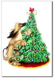 afghan hound giving birth the afghan hound shop afghan hounds and christmas
