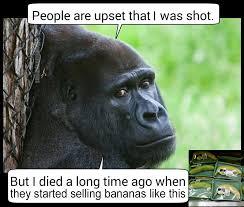Ape Meme - hipster harambe wrapped bananas by memenonymous on deviantart