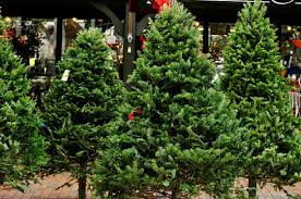 where can you buy a fresh tree in the tri cities survey