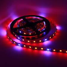 blue led strip lights 12v red blue u003d5 1 4 1 300led 5050 growing dc 12v led strip light non